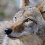 Woburn: polícia alerta para presença de animais selvagens